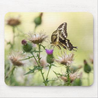 Mousepad Borboleta gigante de Swallowtail
