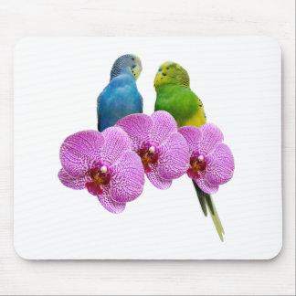 Mousepad Budgie com orquídea roxa
