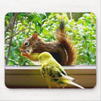 Mousepad Budgie e esquilo vermelho