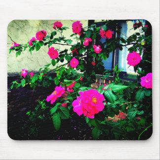Mousepad Bush cor-de-rosa cor-de-rosa bonito