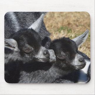 Mousepad Cabras do bebê em um dia ensolarado