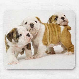 Mousepad Cães de filhote de cachorro ingleses bonitos dos
