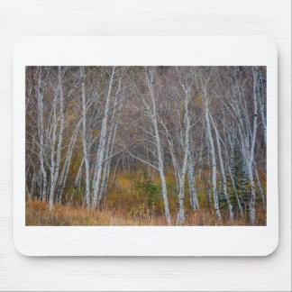 Mousepad Caminhada nas madeiras