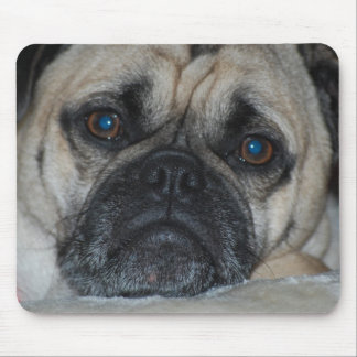 Mousepad Cara triste do Pug