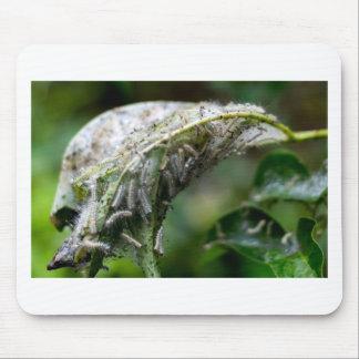 Mousepad Caterpillar choca a queda da chuva do casulo
