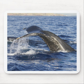 Mousepad Cauda da baleia