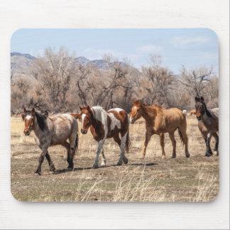 Mousepad Cavalos bonitos em um pasto