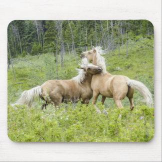 Mousepad Cavalos de Palamino