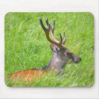 Mousepad Cervos de fallow do fanfarrão na grama