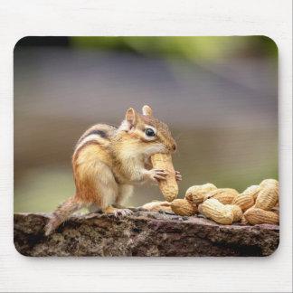 Mousepad Chipmunk que come um amendoim