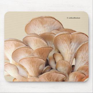 Mousepad Close up de uma colônia do cogumelo de ostra