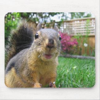 Mousepad Close up do esquilo