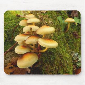Mousepad Cogumelo do fasciculare de Hypholoma