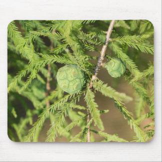 Mousepad Cone da semente de Cypress calvo