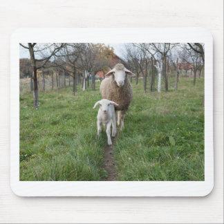 Mousepad Cordeiro e carneiros