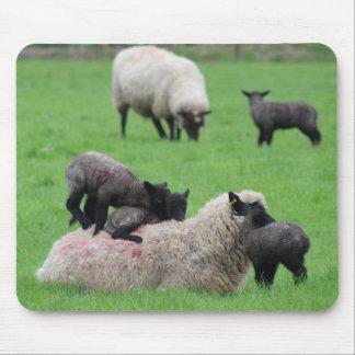 Mousepad Cordeiro e carneiros do primavera