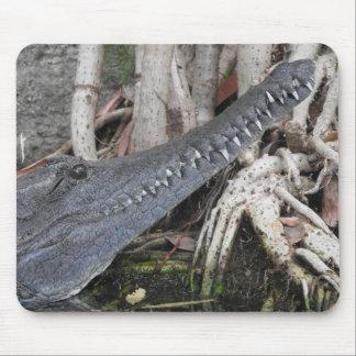 Mousepad Crocodilo de água doce