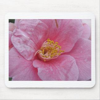 Mousepad Cultivar antigo da flor do japonica da camélia