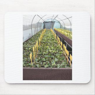 Mousepad Cultivo da estufa da flor do japonica da camélia