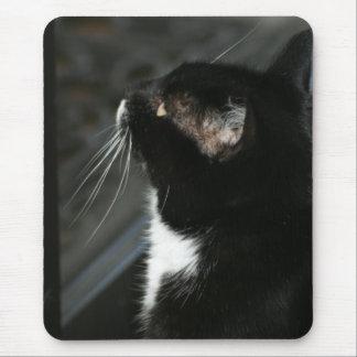 Mousepad curioso do gato