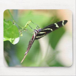 Mousepad da borboleta da zebra