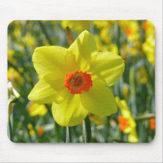 Mousepad Daffodils amarelos alaranjado 01,0