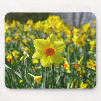 Mousepad Daffodils amarelos alaranjado 01.0.2
