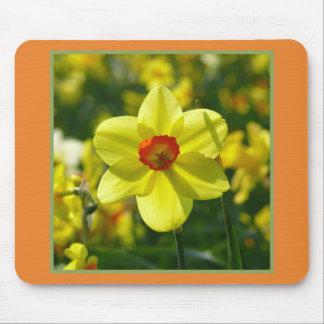 Mousepad Daffodils amarelos alaranjado 02.2g