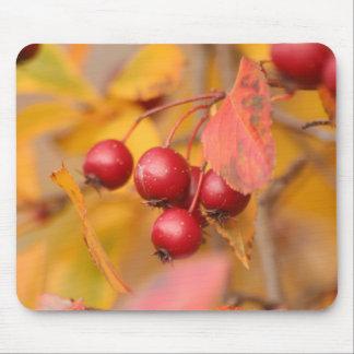 Mousepad das bagas do outono