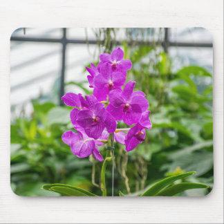 Mousepad das orquídeas