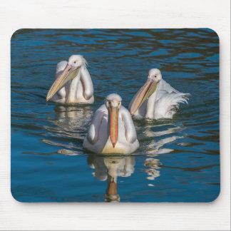 Mousepad de três pelicanos