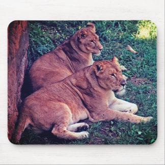 Mousepad Descanso de dois leões -