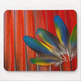 Mousepad Do Macaw escarlate do design da pena