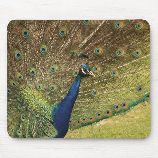 mousepad do pavão