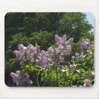Mousepad Duas borboletas de Swallowtail em um Lilac Bush
