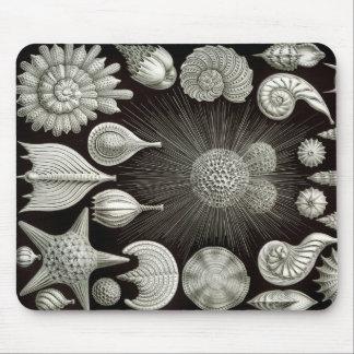 Mousepad Ernst Haeckel Thalamphora