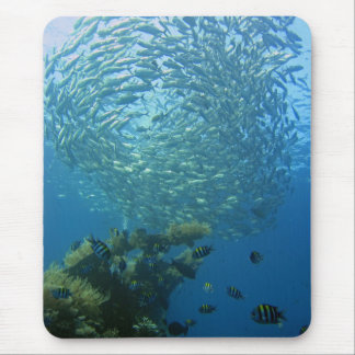 Mousepad Escola dos peixes