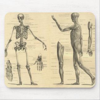 Mousepad Esqueleto da anatomia e músculos humanos do corpo