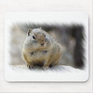 Mousepad Esquilo à terra bonito