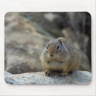 Mousepad Esquilo à terra bonito super