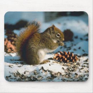 Mousepad Esquilo atado vermelho