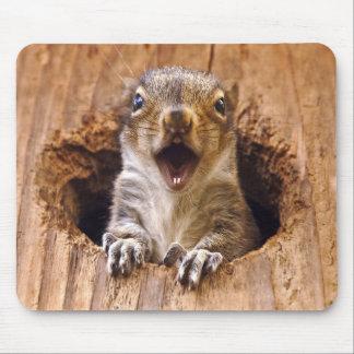 Mousepad Esquilo chocado