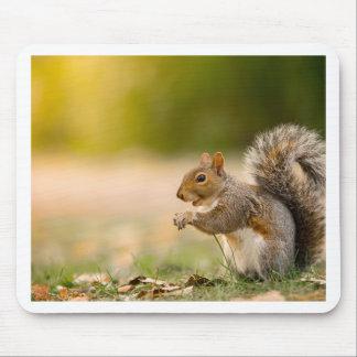 Mousepad Esquilo com fome