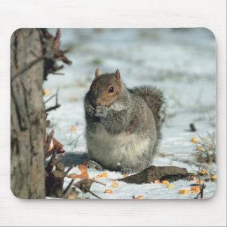 Mousepad Esquilo do inverno