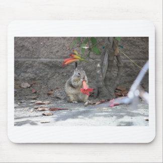 Mousepad Esquilo Loving da flor