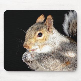 Mousepad Esquilo que come uma porca