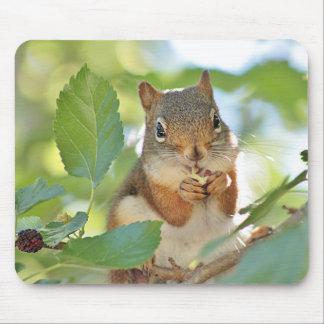 Mousepad Esquilo vermelho