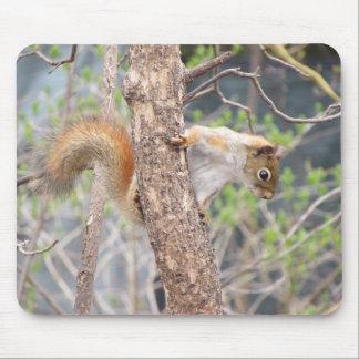 Mousepad Esquilo vermelho americano