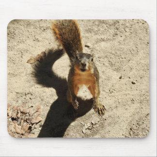 Mousepad Esse esquilo louco