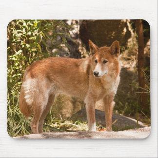 Mousepad Esteira australiana do rato do dingo